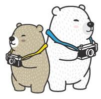 Two bears with cameras