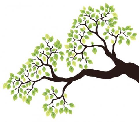 Drawing of a tree branch with green leaves